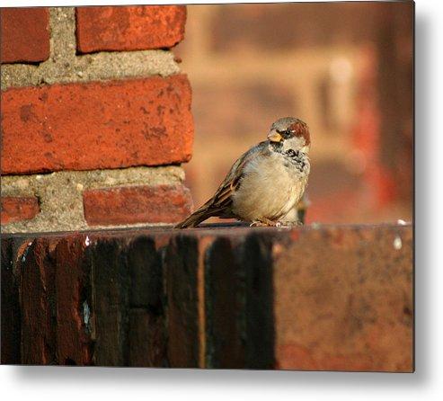 Bird Metal Print featuring the photograph Brick And Bird by Jason Hochman