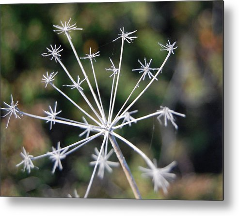 Stalk Metal Print featuring the photograph Brittle Stars by Jean Booth