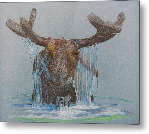 Moose Metal Print featuring the drawing Bullwinkle by Dan Hausel