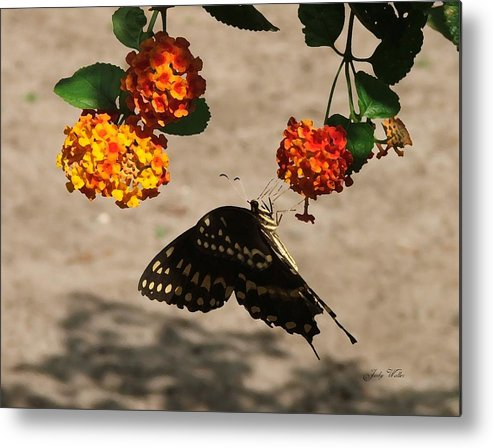 Butterfly Metal Print featuring the photograph Butterfly And Nature by Judy Waller