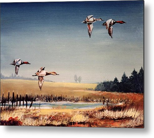 Ducks Metal Print featuring the painting Casing The Joint by Barry Smith