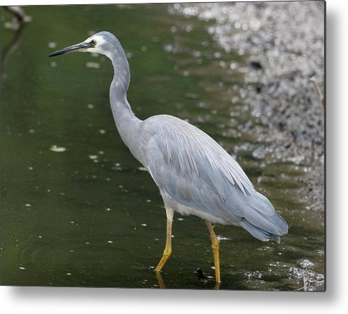 Fish Metal Print featuring the photograph Caution by Masami Iida