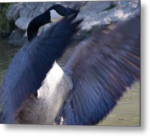 Goose Metal Print featuring the photograph Director by Betsy Knapp