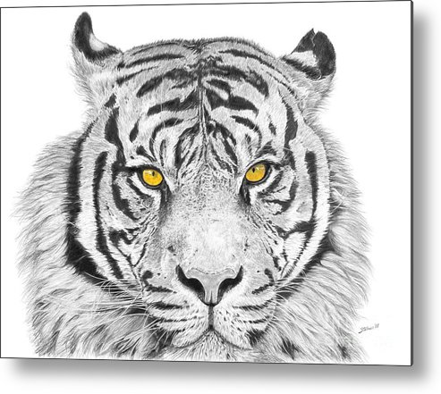 Tiger Metal Print featuring the drawing Eyes Of The Tiger by Shawn Stallings