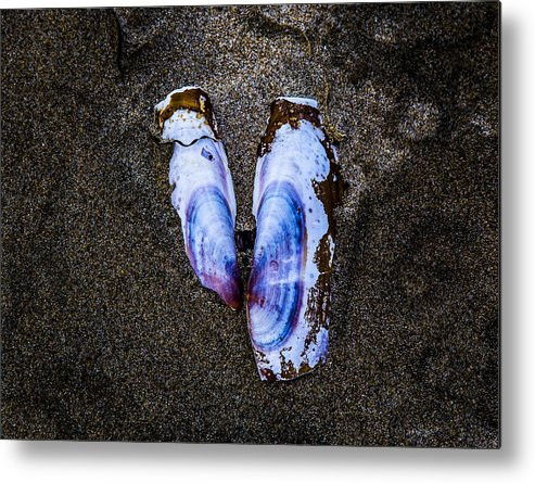 Metal Print featuring the photograph Fallen Butterfly by Angus Hooper Iii