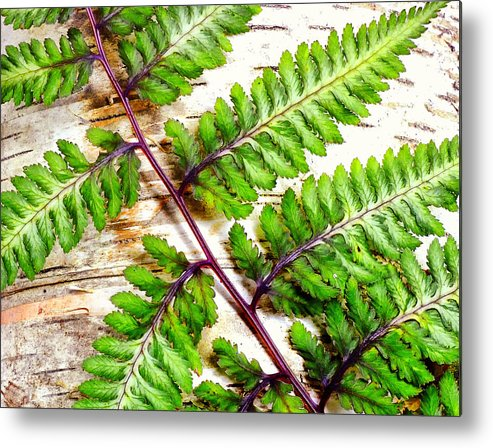 Fern Metal Print featuring the photograph Fern Against Birsh by Peg Runyan