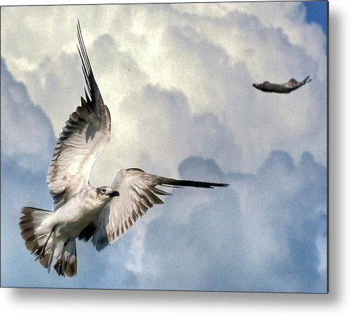 Seagull Metal Print featuring the photograph Free Fly by Roger And Michele Hodgson