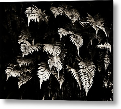 Hawaii Metal Print featuring the photograph Fronds by Marilyn Hunt