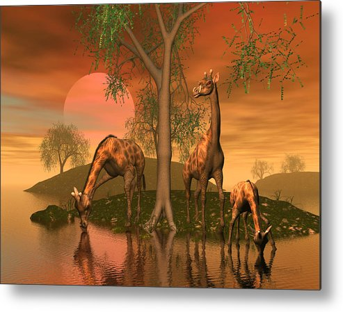 Animals Metal Print featuring the digital art Giraffe Family By John Junek by John Junek