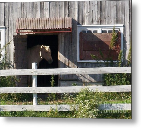 Horse Metal Print featuring the photograph Good Morning - Photograph by Jackie Mueller-Jones