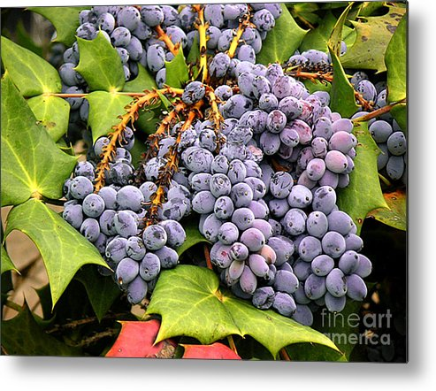 Nature Metal Print featuring the photograph Grapes With Leaves by Lucyna A M Green
