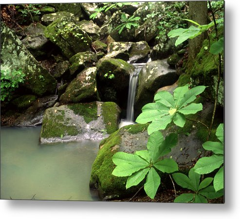 Metal Print featuring the photograph Green by Curtis J Neeley Jr