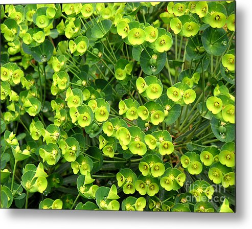 Nature Metal Print featuring the photograph Greens And Yellows by Lucyna A M Green
