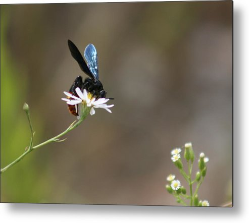 Wasp Metal Print featuring the photograph Just Barely Room by David Dunham
