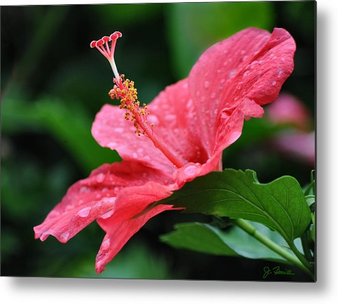 Hawaii Metal Print featuring the photograph Kauai Beauty by Joe Bonita
