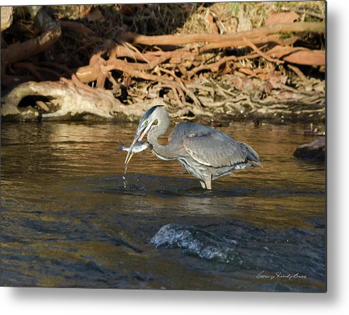 Heron Metal Print featuring the photograph Lunch On The Neuse River by George Randy Bass