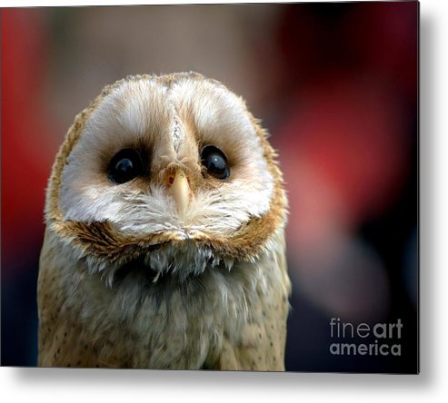 Wildlife Metal Print featuring the photograph Please by Jacky Gerritsen