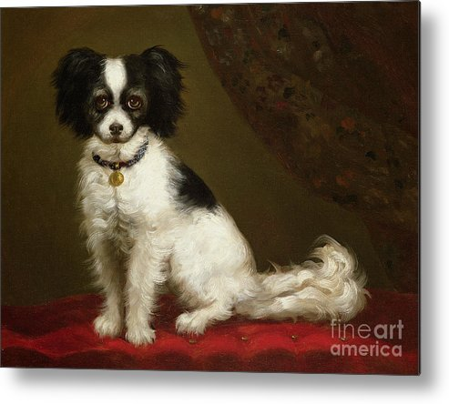 Portrait Of A Spaniel By Anonymous Metal Print featuring the painting Portrait Of A Spaniel by Anonymous