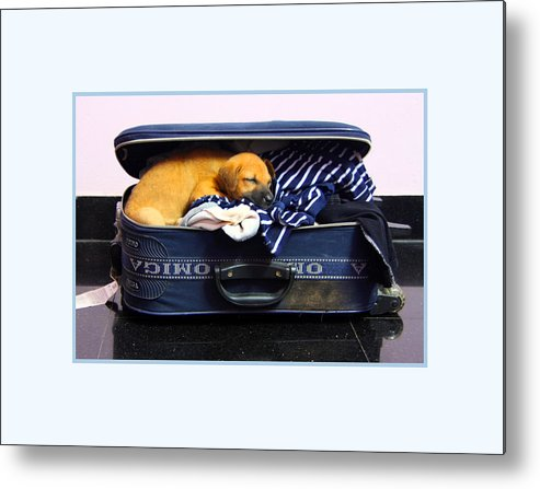Dog Metal Print featuring the photograph Ready To Fly by Pradeep Subramanian