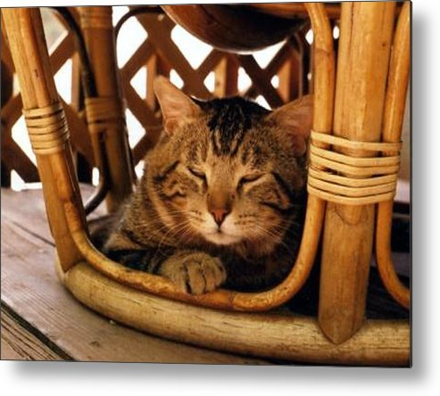 Cats Metal Print featuring the photograph Scrappy In Earth Tones by Heather S Huston
