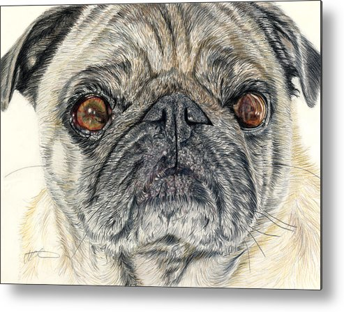 Dogs Metal Print featuring the drawing Stanley by Joanne Stevens