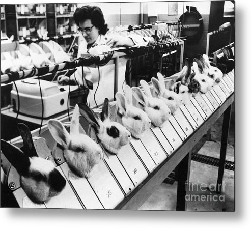 1957 Metal Print featuring the photograph Tests On Animals, 1957 by Granger