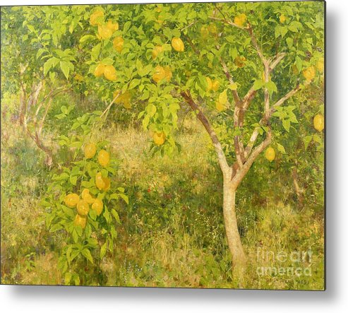 The Metal Print featuring the painting The Lemon Tree by Henry Scott Tuke