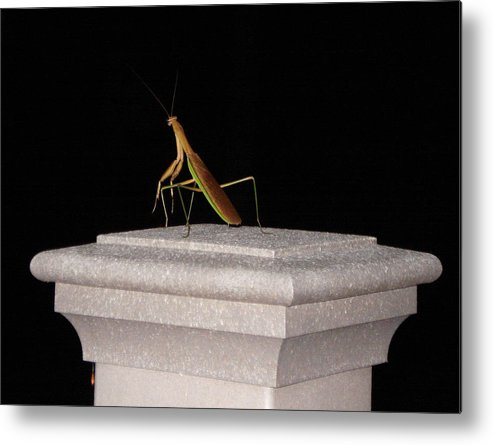 Praying Mantis Metal Print featuring the photograph The Prince Of Darkness by Kevin Callahan