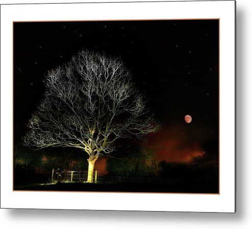 Tree Metal Print featuring the photograph Tree Of Light by Mal Bray
