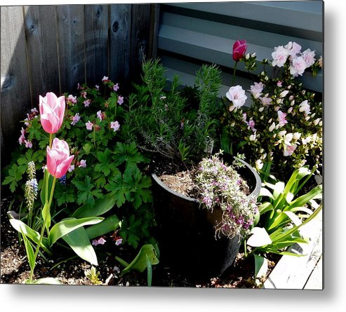 Scene Metal Print featuring the photograph Tulips And Bluebells by Maro Kentros