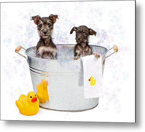 Dog Metal Print featuring the photograph Two Scruffy Puppies In A Tub by Susan Schmitz