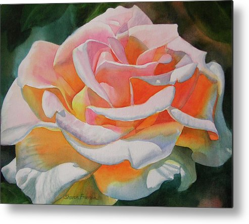 Rose Painting Metal Print featuring the painting White Rose With Orange Glow by Sharon Freeman