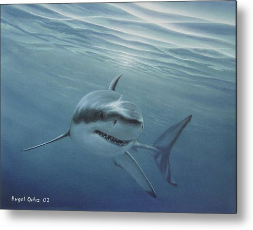 Shark Metal Print featuring the painting White Shark by Angel Ortiz