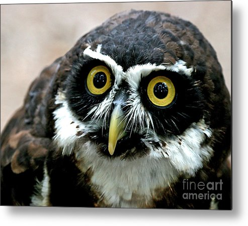 Eyes Metal Print featuring the photograph Whos Looking Now by E Mac MacKay