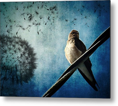 Swallow Metal Print featuring the photograph Wishing Swallow by Nancy Coelho