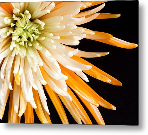 Flower Metal Print featuring the photograph Yellow Flower On Black by Al Mueller