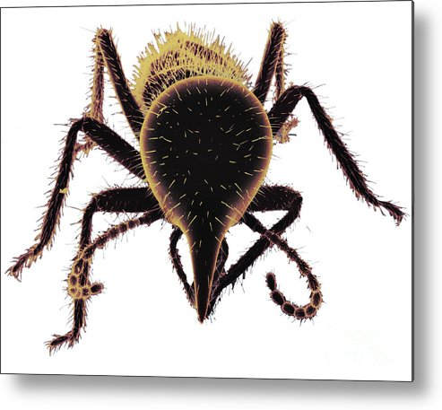 Termite Metal Print featuring the photograph Termite Soldier by David M. Phillips