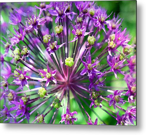 Flower Photography Metal Print featuring the photograph Allium Series - Close Up by Moon Stumpp