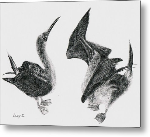 Animals Metal Print featuring the drawing Blue-footed Boobies by Lucy D