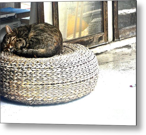 Abstract Metal Print featuring the photograph Deck Cat by Lauren Leigh Hunter Fine Art Photography