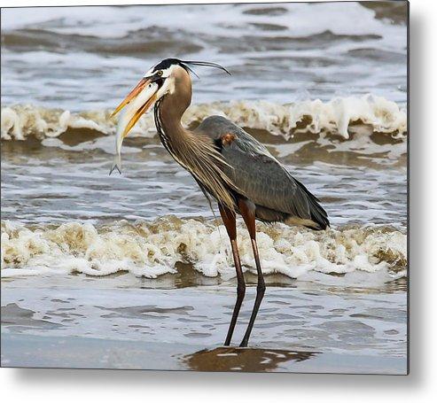 Bird Metal Print featuring the photograph Beach Picnic by David Mortenson