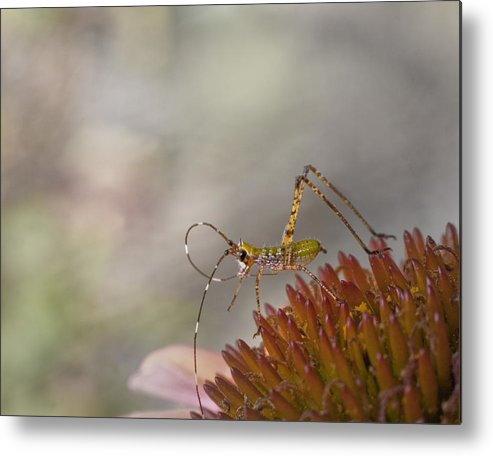 Katydid Metal Print featuring the photograph Doin' The Twist by David and Carol Kelly