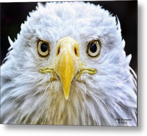 Bald Eagle Metal Print featuring the photograph Eagle Eyes by Peg Runyan