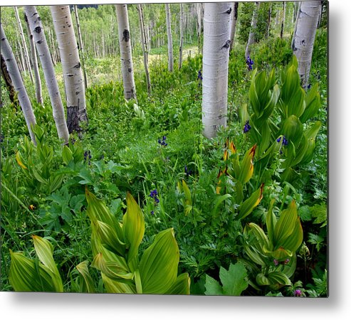 Colorado Metal Print featuring the photograph Fields Of Green by Bill Keiran
