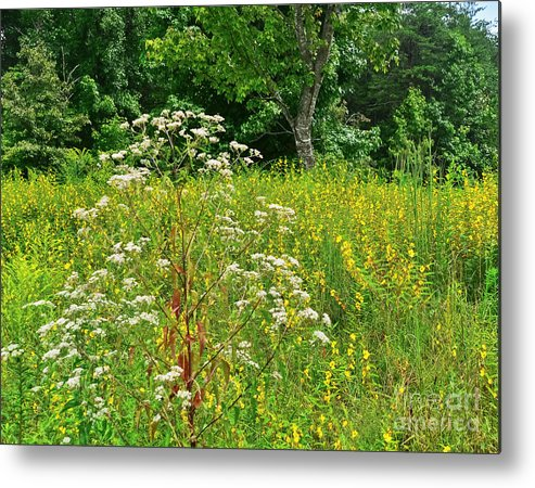 Travel Metal Print featuring the photograph Flowers Of The Field by Elvis Vaughn