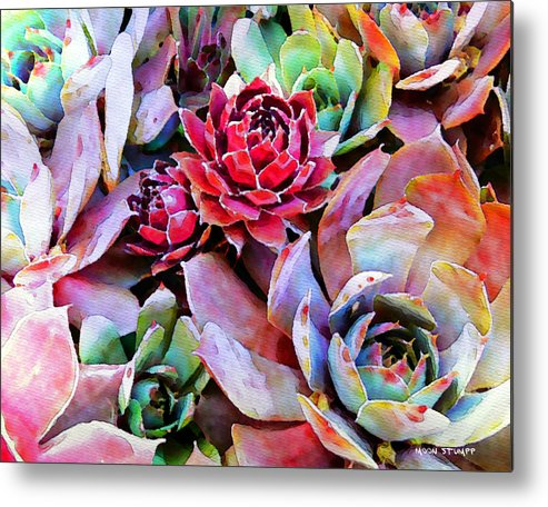 Hens And Chicks Photography Metal Print featuring the painting Hens And Chicks Series - Copper Tarnish by Moon Stumpp