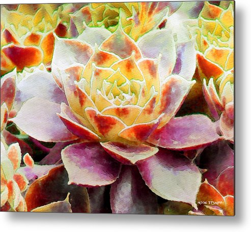 Hens And Chicks Photography Metal Print featuring the painting Hens And Chicks Series - Early Morning Quite by Moon Stumpp