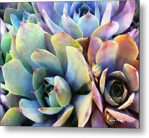 Hens And Chicks Photography Metal Print featuring the painting Hens And Chicks Series - Soft Tints by Moon Stumpp