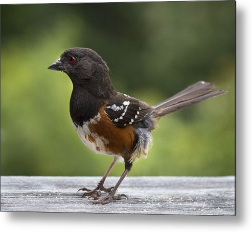 Bird Metal Print featuring the photograph Is Cecil Around by Jean Noren