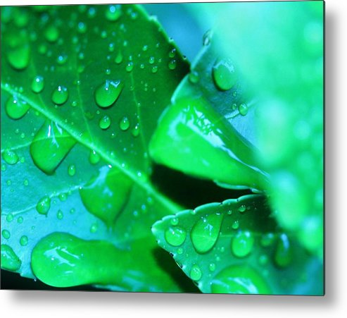 Nature Metal Print featuring the photograph Leafish by Beth Hedgpeth